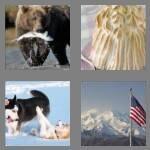 cheats-4-pics-1-word-6-letters-alaska-8161364