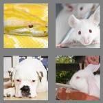 cheats-4-pics-1-word-6-letters-albino-5555766