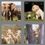 cheats-4-pics-1-word-6-letters-animal-3801083