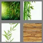 cheats-4-pics-1-word-6-letters-bamboo-5242358