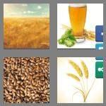 cheats-4-pics-1-word-6-letters-barley-9848565