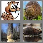 cheats-4-pics-1-word-6-letters-beaver-6048542