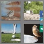 cheats-4-pics-1-word-6-letters-birdie-6189534