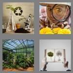cheats-4-pics-1-word-6-letters-botany-2533725