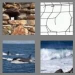 cheats-4-pics-1-word-6-letters-breach-4985480