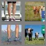 cheats-4-pics-1-word-6-letters-calves-1001806