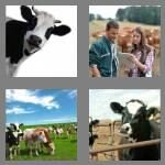 cheats-4-pics-1-word-6-letters-cattle-2268151