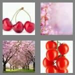 cheats-4-pics-1-word-6-letters-cherry-5887242