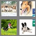 cheats-4-pics-1-word-6-letters-collie-3045290
