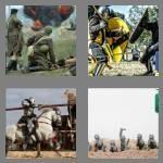 cheats-4-pics-1-word-6-letters-combat-3104542