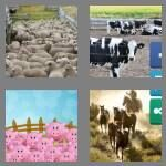cheats-4-pics-1-word-6-letters-corral-9612645