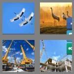 cheats-4-pics-1-word-6-letters-cranes-9068768