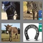 cheats-4-pics-1-word-6-letters-equine-5095474