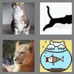 cheats-4-pics-1-word-6-letters-feline-3596338