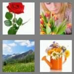 cheats-4-pics-1-word-6-letters-flower-9896542