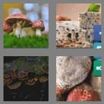cheats-4-pics-1-word-6-letters-fungus-2240574