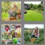 cheats-4-pics-1-word-6-letters-garden-3652330