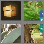 cheats-4-pics-1-word-6-letters-hiding-9869198