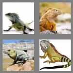 cheats-4-pics-1-word-6-letters-iguana-9970532