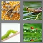 cheats-4-pics-1-word-6-letters-insect-1509330