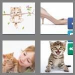 cheats-4-pics-1-word-6-letters-kitten-9253645