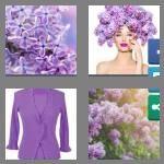 cheats-4-pics-1-word-6-letters-lilacs-4975488