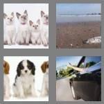 cheats-4-pics-1-word-6-letters-litter-5346100