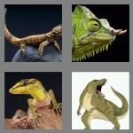 cheats-4-pics-1-word-6-letters-lizard-5308148