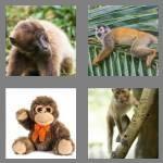 cheats-4-pics-1-word-6-letters-monkey-4389912