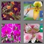 cheats-4-pics-1-word-6-letters-orchid-6918579