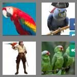 cheats-4-pics-1-word-6-letters-parrot-8324463