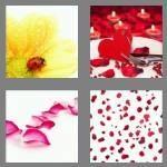 cheats-4-pics-1-word-6-letters-petals-3851701