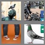 cheats-4-pics-1-word-6-letters-pigeon-6538082