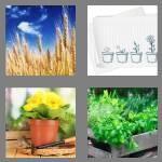 cheats-4-pics-1-word-6-letters-plants-4617367