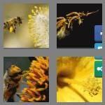 cheats-4-pics-1-word-6-letters-pollen-8164519