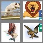 cheats-4-pics-1-word-6-letters-pounce-7503515