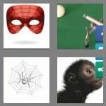 cheats-4-pics-1-word-6-letters-spider-9367073