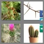 cheats-4-pics-1-word-6-letters-thorny-2265638