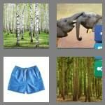 cheats-4-pics-1-word-6-letters-trunks-6334772