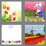 cheats-4-pics-1-word-6-letters-tulips-8727180