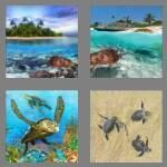cheats-4-pics-1-word-6-letters-turtle-3486195