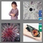 cheats-4-pics-1-word-6-letters-urchin-9402815
