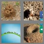 cheats-4-pics-1-word-7-letters-anthill-3364397