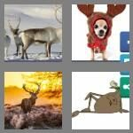 cheats-4-pics-1-word-7-letters-antlers-1233577