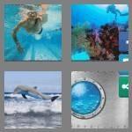 cheats-4-pics-1-word-7-letters-aquatic-7787003