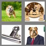 cheats-4-pics-1-word-7-letters-bulldog-3560405