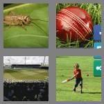 cheats-4-pics-1-word-7-letters-cricket-3456185