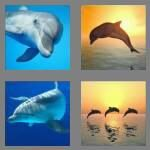 cheats-4-pics-1-word-7-letters-dolphin-7204042
