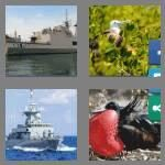 cheats-4-pics-1-word-7-letters-frigate-9368286