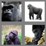 cheats-4-pics-1-word-7-letters-gorilla-7070618